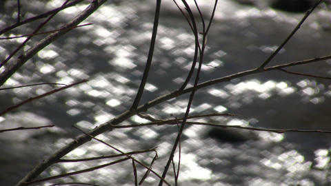 Branches gently sway amidst a flowing creek (High... Stock Video Footage