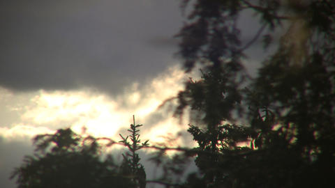 Trees forground the sunlit clouds at dawn (High Definition) Footage