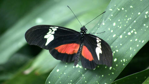 Butterfly resting on a leaf (High Definition) Footage