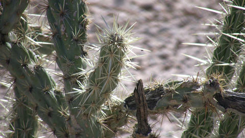 Cactus sits in the desert soaking up sunlight (High... Stock Video Footage
