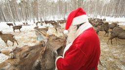 Santa Claus Feeding Deer Footage
