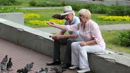 Senior Couple Feeding Pigeons Footage