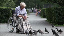 Elder Woman Feeding Bread Crumbs Pigeons Footage
