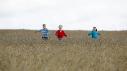 Cute Kids Running Across The Field Enjoying Freedom Of Being A Child Filmmaterial