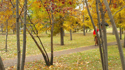 Couple of seniors walking along the park lane on a rainy day Footage