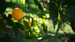 Orange Hang Out In Branch stock footage