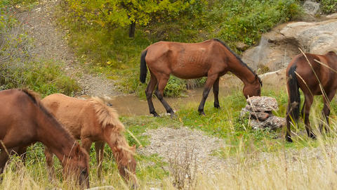Wild Horses Graze In The Mountains stock footage