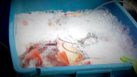 Live Fresh Fish stock footage