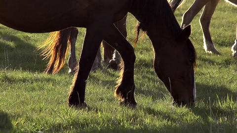 Sunny Pasture Footage