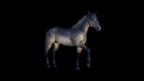 Grulla Horse - Loop - Alpha Channel stock footage
