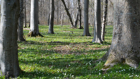 Forest floor in spring Footage