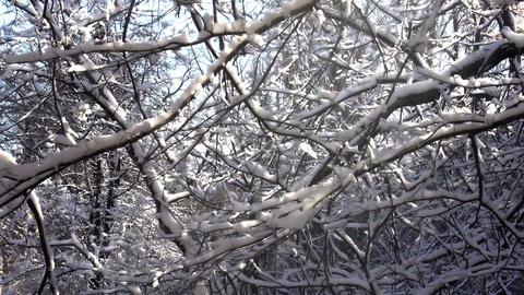 Morning In The Winter Forest HD stock footage