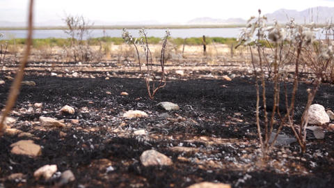 Burned Scarred Land Dolly stock footage