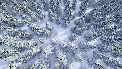 Winter forest Animation