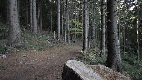 Mountain Biker Riding In Wood stock footage