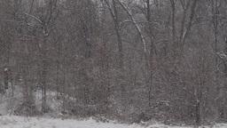 winter trees Footage