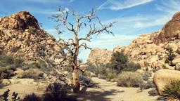 Barren Tree Live Action