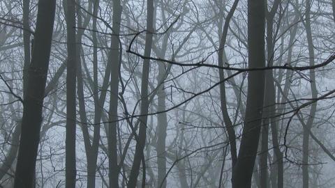 4K Super Scary Winter Foggy Forest 4 tilt Footage