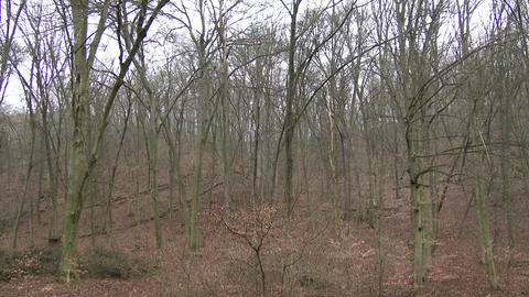 4 K Winter Forest Before Snow 1 stock footage