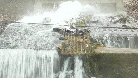 Sewage Water Flowing 8 tilt Footage