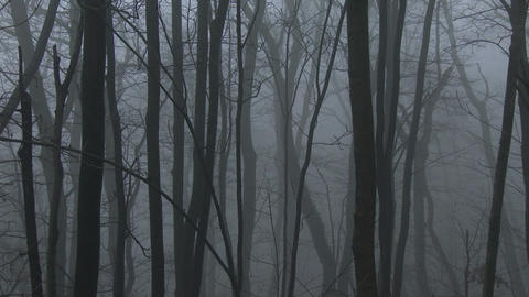 Super Scary Winter Foggy Forest 6 zoom Footage