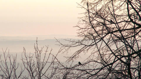 Winter Sunrise in Nature 6 birds Footage