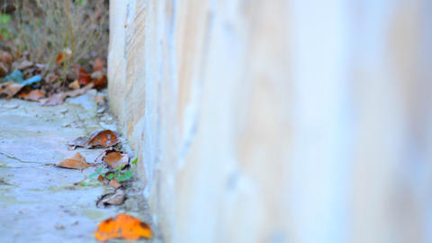 Blurred Stone Wall with Shallow Focus Motion throu Footage