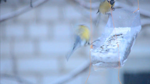 Family Of Titmouses At Bird Feeders stock footage
