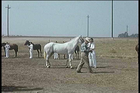 A 1950s horse show Footage