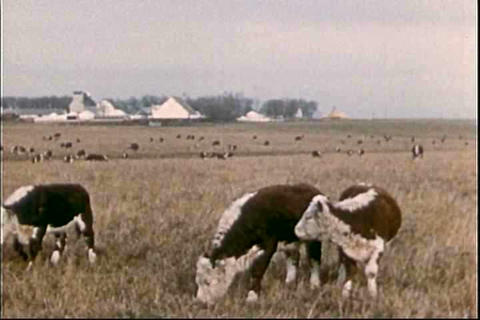 The problems of cattlemen and the department of ag Footage