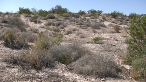 Shrubs sit in the desert soaking up sunlight (High... Stock Video Footage