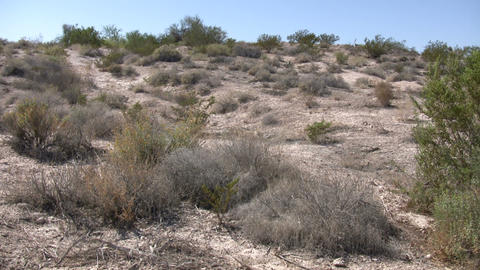 Shrubs sit in the desert soaking up sunlight (High... Stock Video Footage