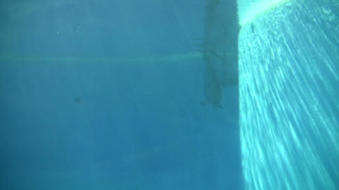 Dolphin gracefully swims under the blue sunny water (High... Stock Video Footage