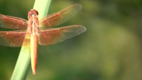 Dragonfly rests on a leaf amidst sunny afternoon (High Definition) Footage
