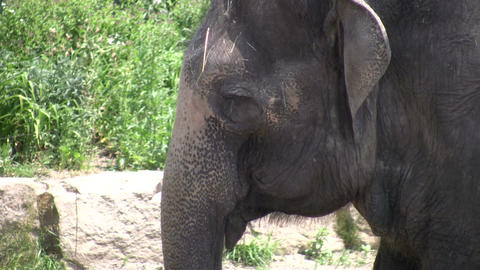 Elephant relaxes in the shade (High Definition) Stock Video Footage