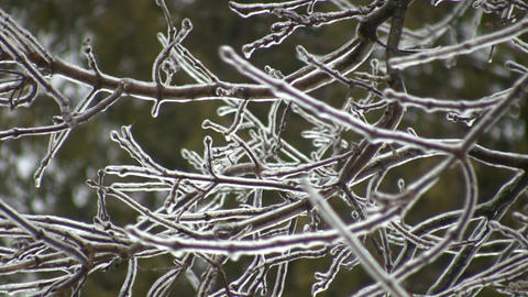 Ice covered branches gently sway in the wind (High... Stock Video Footage