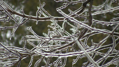 Ice covered branches gently sway in the wind (High Definition) Footage