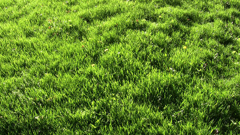 Field of green grass is illuminated by sunlight (High... Stock Video Footage