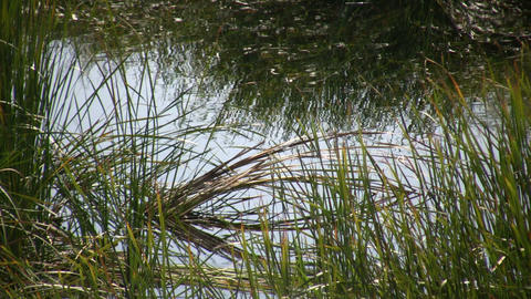 Rippling water reflects the swaying grass (High Definition) Stock Video Footage