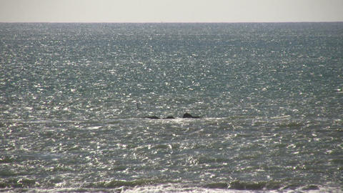 Water scenic of sparkling ocean on sunny day (High... Stock Video Footage