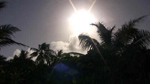 Palm tree's silhouette sways amidst the sunny sky (High... Stock Video Footage