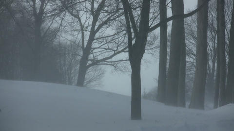 Scenic of snow blowing through a park (High Definition) Footage