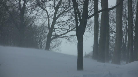 Scenic of snow blowing through a park (High Definition) Stock Video Footage