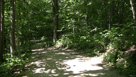 Pathway leads through a beautiful sunlit forest (High... Stock Video Footage