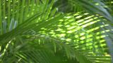 Tropical Plants Gently Sway In The Breeze (High Definition) stock footage