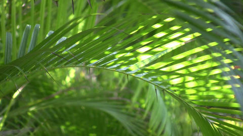 Tropical plants gently sway in the breeze (High Definition) Footage