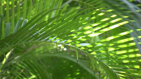 Tropical plants gently sway in the breeze (High Definition) Stock Video Footage