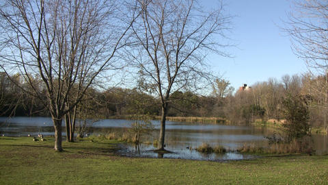Autumn scenic of ducks hanging around sunny pond (High... Stock Video Footage