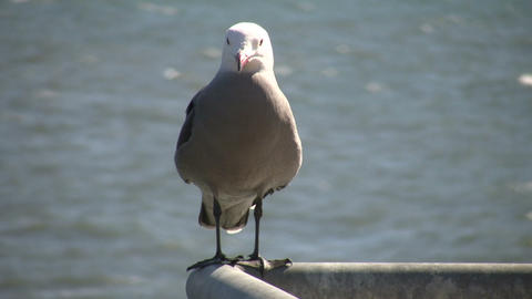 Seagull rests on a railing amidst sunny day (High Definition) Footage