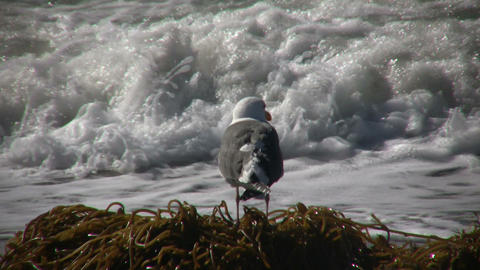 Seagull rests on sunny beach amidst the ocean (High... Stock Video Footage